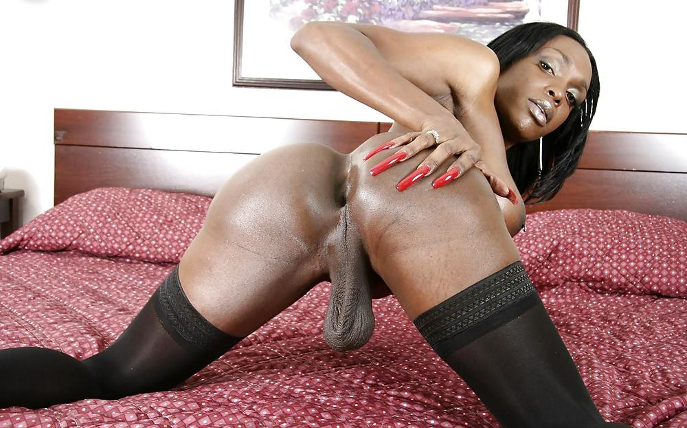 Black tgirl ass, big tit ass vids